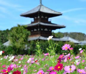 世界最古の木造建築法隆寺